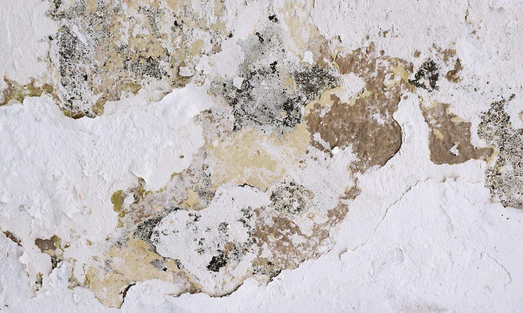 le muffe danneggiano le pareti